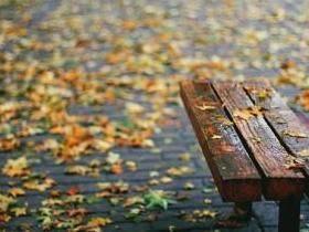落叶,冬雨