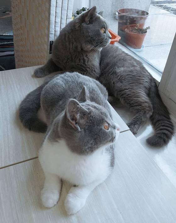 手机里的一些猫片